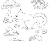 kleurplaat-herfst-eekhoorntje